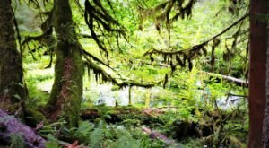 You'll Forget You're In Washington On The Hall Of Mosses Trail, An Easy Hike That Leads Through A Temperate Rainforest