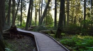 Trail Of The Cedars Is The Enchanting Boardwalk Hike Every Montanan Should Experience