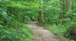 The Hemlock Cliffs National Scenic Trail Might Be One Of The Most Beautiful Short-And-Sweet Hikes To Take In Indiana