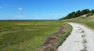Explore The Lesser Known Side Of Massachusetts On The Sandy Neck Nature Trail