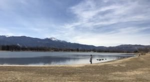 Dead Fish Are Washing Ashore In Colorado Springs, Colorado Due To A Bloom Of Blue-Green Algae