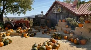 Mark Your Fall Calendar For The Pumpkin Fest At Mortimer Farms In Arizona