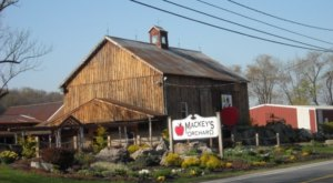 Start Planning For A Trip To Mackey's Orchard In New Jersey This Fall For Apple Cider Donuts Galore