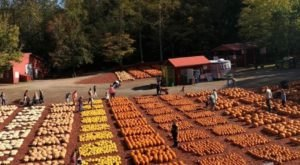 Burt's Pumpkin Farm Is A Beautiful Fall Farm Hiding In Plain Sight In Georgia That You Need To Visit This Autumn