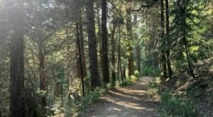 The Enchanting Forest Trail In Southern California, Dogwood Campground Loop, That Will Keep You Nice And Cool On A Hot Summer Day