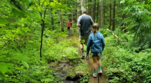 Walter/Newton Natural Area Trail Is A Beginner-Friendly Waterfall Trail In New Hampshire That's Great For A Family Hike