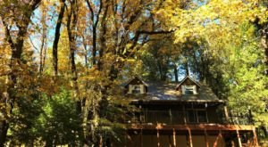 Experience The Fall Colors Like Never Before With A Stay At This Forest Cabin In Northern California