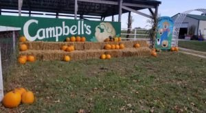 Fall Into The Season With A Weekend Trip To Campbell's Maze Daze & Pumpkin Patch In Missouri