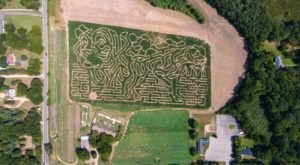 Get Lost In A Dog-Shaped Corn Maze This Fall At Deep Roots Produce In Michigan