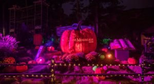 The Pumpkin Festival's Beloved Glow By Night Experience Will Be Returning To Georgia