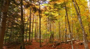 These 7 Hiking Trails In New Hampshire Lead To The Best Fall Foliage Views In The State