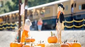 The Pumpkin Patch Express At The River Fox Train In Northern California Is Filled With Fun For The Whole Family