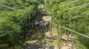 Race Your Friends On A Unique Quad Zipline At Gorilla Grove Treetop Adventures In Pennsylvania