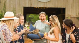 Sip Wine With Sloths At Wild Acres In Mississippi