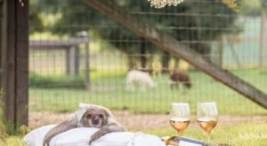 Sip Wine With Sloths At Barn Hill Preserve In Louisiana