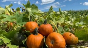 Nothing Says Fall Is Here More Than A Visit To Pennsylvania's Charming Pumpkin Farm