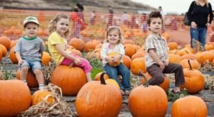 Get The Perfect Pumpkin Pie From Iowa Orchard, A Family Owned Farm