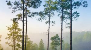 Longleaf Vista Interpretive Trail Is A Challenging Hike In Louisiana That Will Make Your Stomach Drop