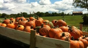 Chuck A Pumpkin, Take A Hayride, And More At Country Pumpkins In Kentucky