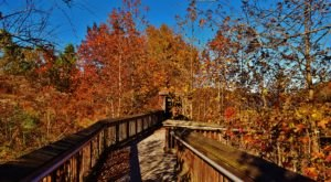 Maryland's Patuxent Research Refuge Is An Absolute Stunner During Autumn