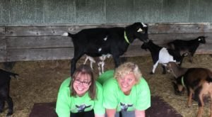 Have Ya Herd…You Can Take A Goat Yoga Class In Wisconsin