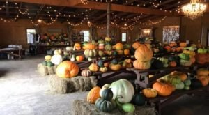 BoBrook Farms' Winery And Pumpkin Patch Are The Perfect Fall Pairing In Arkansas
