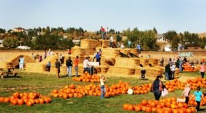 Berry Acres In Minot, North Dakota Has 50,000 Pumpkins, A Corn Maze, And So Much More