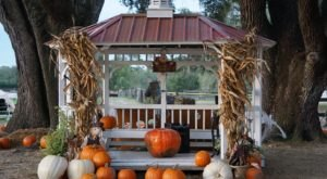 Drive Through An Incredible Pumpkin Patch At Florida's Painted Oaks Academy