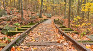 Follow An Old Logging Railroad To A Waterfall On This Enchanting Virginia Trail