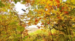 Wildflowers And Foliage Of All Colors Pave The Way On The Siltstone Trail In Kentucky