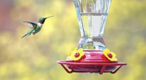 Thousands Of Hummingbirds Are Headed Straight For Louisiana This Fall