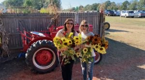 The Festive Sunflower Farm In Mississippi Where You Can Cut Your Own Flowers