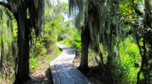 You Can Explore For Hours Upon The Boardwalks At Barataria Preserve In Louisiana
