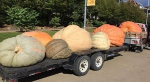 Get A Glimpse Of Massive Pumpkins At The Monster Pumpkins Popup Festival In Pittsburgh This Fall