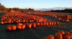 Pick Pumpkins And Drink Wine At Jones Family Farms, A Spectacular Destination In Connecticut