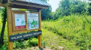 Wilson Springs Nature Preserve In Arkansas Is So Hidden Most Locals Don't Even Know About It