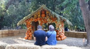 The Pumpkin Extravaganza At Descanso Gardens In Southern California Will Make Your Fall Season Complete