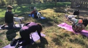Relax And Unwind With Providence Hill Farm's Goat Yoga Classes In Kansas