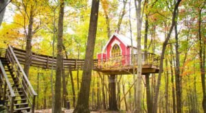 Experience The Fall Colors Like Never Before With A Stay At The Mohican Treehouses In Ohio