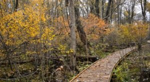 You Can Explore For Hours Upon The Boardwalks At Cedar Bog Nature Preserve In Ohio