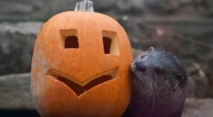 Travel From Cleveland To The Akron Zoo For Howl-O-Ween Fun This October