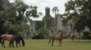 Cumberland Island Is One Of The Strangest Places You Can Go In Georgia