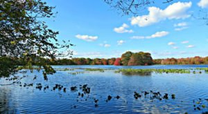 Why New York's Massapequa Preserve Is Perfect For A Family Weekend