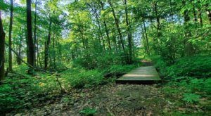 Burnett Woods Nature Preserve In Indiana Is So Well-Hidden, It Feels Like One Of The State's Best Kept Secrets