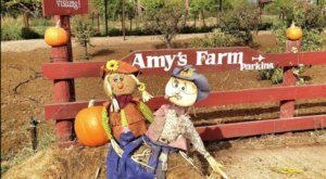 The Old-Fashioned Farm In Southern California, Amy's Farm, Is The Perfect Destination For A Day Trip This Fall