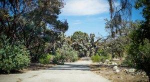 Wander Through The Magical, Otherworldly California Botanic Garden In Southern California