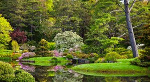 Wander Through The Magical, Otherworldly Asticou Azalea Garden In Maine