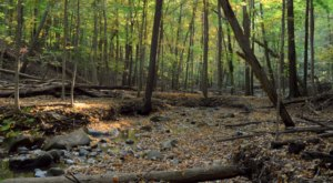Woodland Hills Loop, An Easy Fall Hike Near Detroit, Is Under 2 Miles And You'll Love Every Step You Take