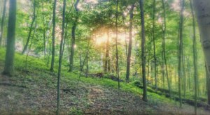 Explore An Old-Growth Forest In Ohio At Dysart Woods, A True Hidden Gem