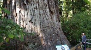 The Easily Accessible Big Tree Wayside In Northern California Is Only Steps From The Parking Lot